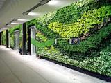 商场植物墙